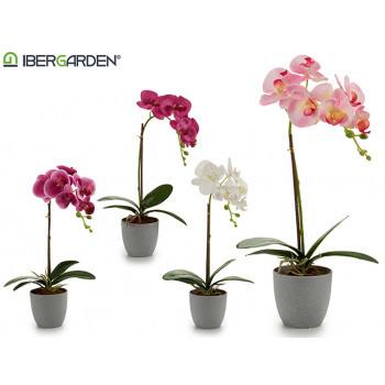 Orchidej  - mix 4 barev Bílá barva